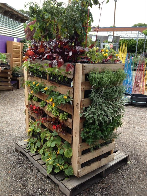 Pallets and vertical gardens houston pallets pasadena skid pallet - Jardin vertical pallet ...